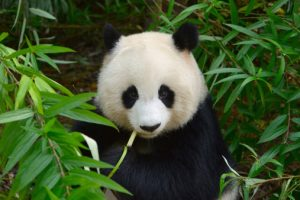 Google Panda Penalty Recovery for Law Firms